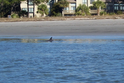 Hilton Head Island Dolphin Watch Amazing site