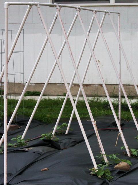 PVC String Bean Poles